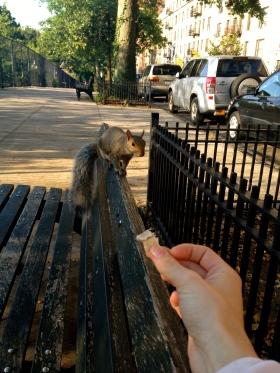 NYC squirrel, park bench, feeding squirrel