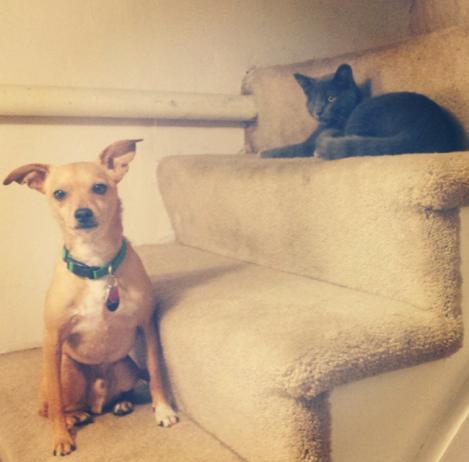 Pets, Cute, Kitten, Dog, Best Friends